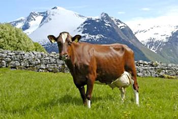 433 Frøy Far: 5063 Vistnes Eier Torill Midtkandal Stryn