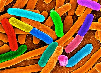 Anna-Synnøve-Nordgard-ecoli-bacteria