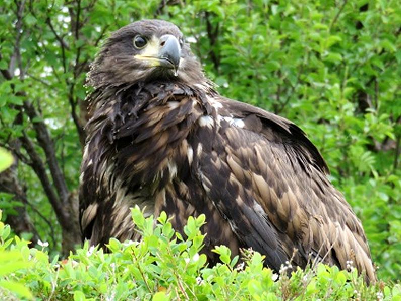 mari-eagle-2