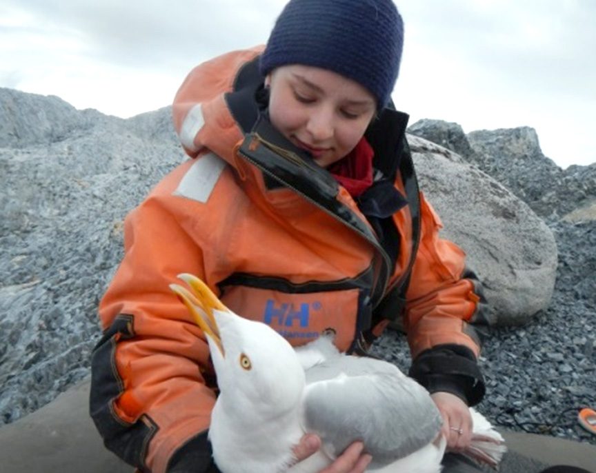 A beautiful glaucous gull, soon to be released. Photo: Marte Melnes